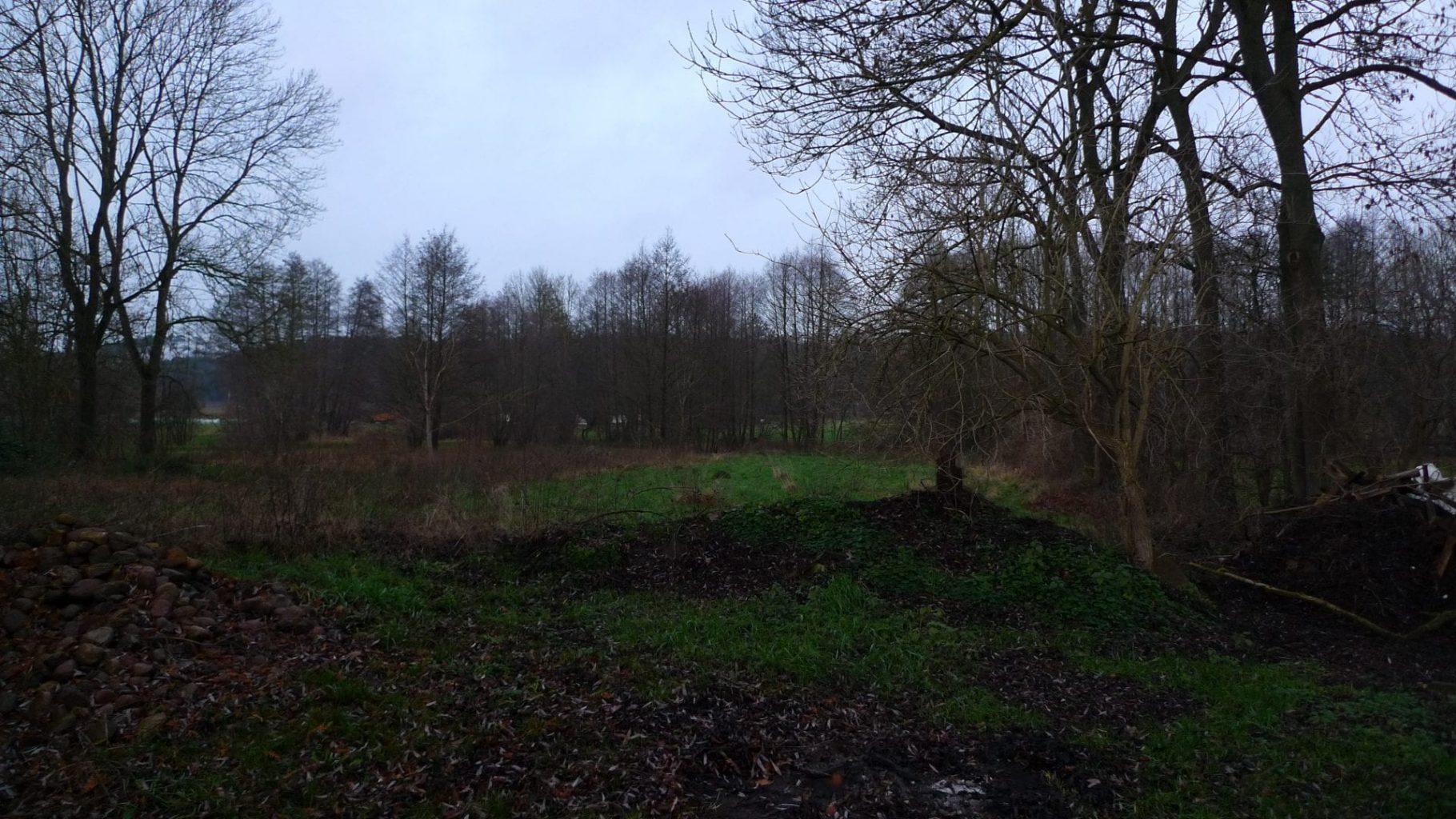 Gartenrundgang Mitte Juli 2021 – Der Mädesüßwald