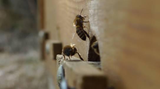 Erster Flug der Bienen 2018