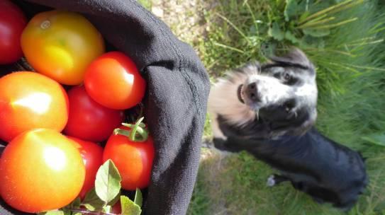 Wie kann ich mich nachhaltiger ernähren?