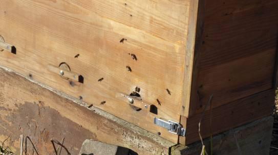 Die Bienen fliegen!