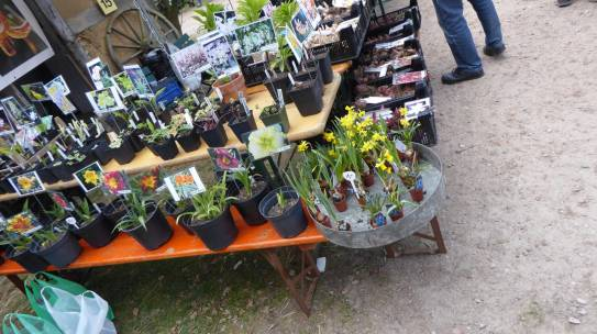 Pflanzenmarkt am Kiekeberg & Plant Haul