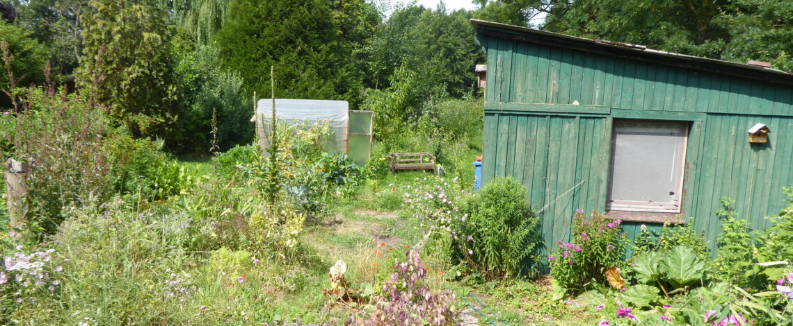 Garten im Juli 2019