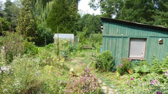 Gartenrundgang im Juli 2019
