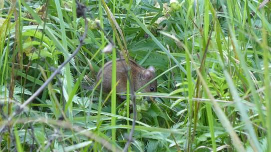 Mäusebuffet in unserem Garten
