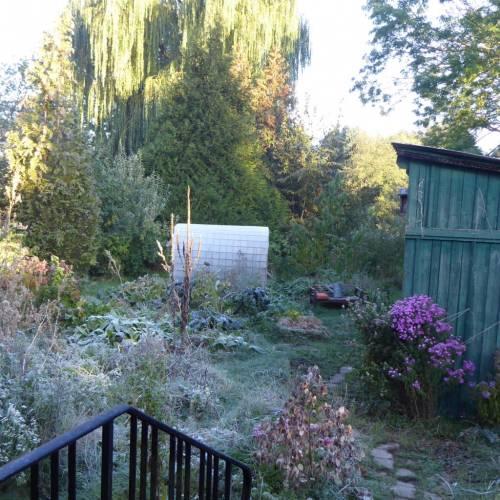 Mut zum unordentlichen Garten